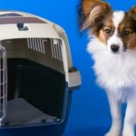 Guide d'achat cage chien jack russel