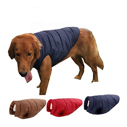 guide dachat manteau chien angelof