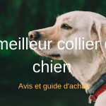 Comparatif collier chien labrador