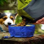 Guide d'achat gamelle chien grand