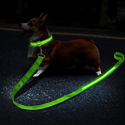guide dachat lampe chien caca