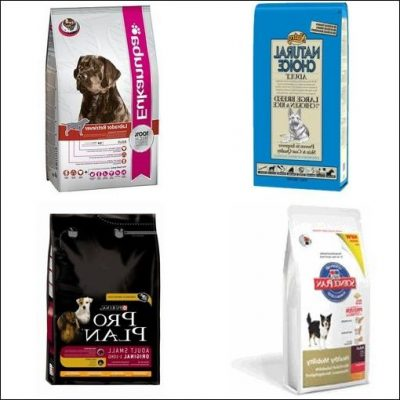 guide dachat nourriture chien royal canin