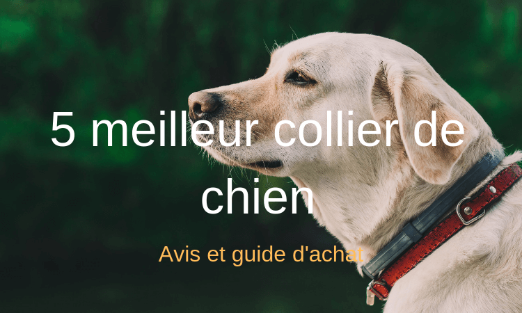 meilleur avis sur collier chien qui parle