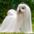Meilleur avis sur manteau chien bichon maltais