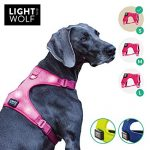Test harnais chien lumineux rechargeable