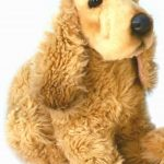 Test peluche chien cocker
