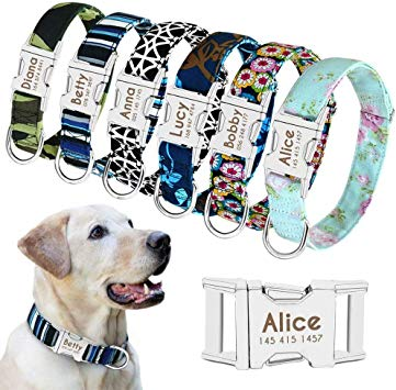 comparatif collier chien taille moyenne