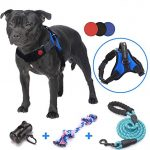 Guide d'achat harnais chien taille m