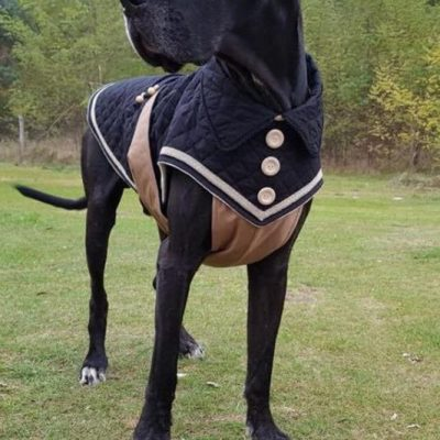 guide dachat pull chien danois