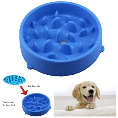 test gamelle chien antiderapante