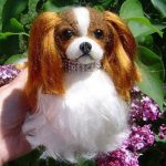 Test manteau chien cavalier king charles