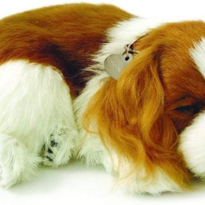 comparatif peluche chien cavalier king charles