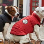 Comparatif pull chien taille m