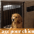 Guide d'achat cage chien