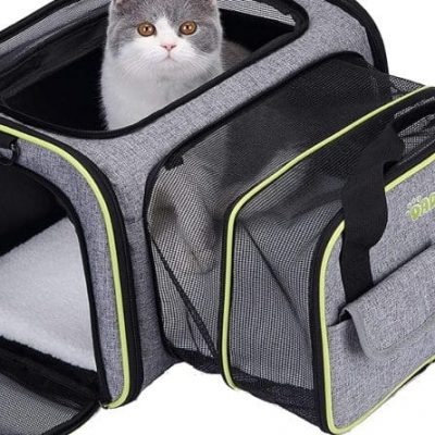 guide dachat transport chien sac