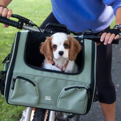 guide dachat transport chien velo