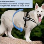 Guide d'achat trappe chien xl