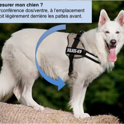guide dachat trappe chien xl