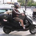 Comparatif transport chien scooter