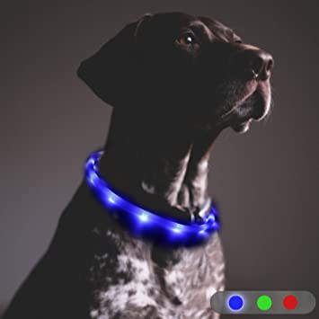 guide dachat collier chien led rechargeable