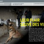 Test croquette chien chasse
