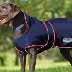 Test manteau chien weatherbeeta