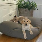 Comparatif tapis chien grand