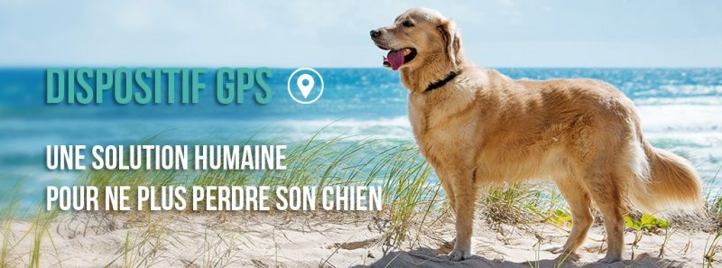 guide dachat collier chien geolocalisation