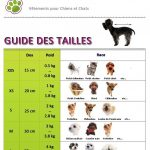 Guide d'achat collier chien taille s