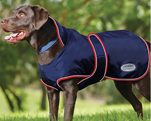 guide dachat manteau chien grande taille impermeable