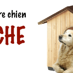 Guide d'achat niche chien moyenne taille