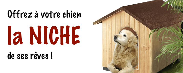 guide dachat niche chien moyenne taille