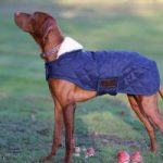 Guide d'achat pull chien imperméable