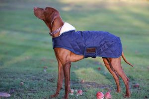 guide dachat pull chien impermeable