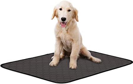 guide dachat tapis chien incontinent