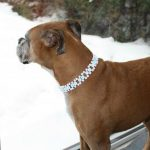 Meilleur avis sur collier chien diamant