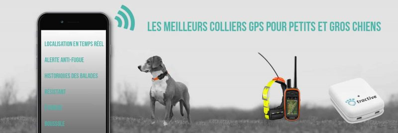 test collier chien chasse