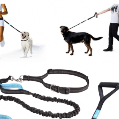 test laisse chien canicross