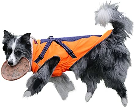 guide dachat manteau chien gwell
