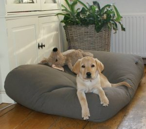 guide dachat tapis chien lavable grande taille